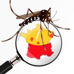 Illustration montrant un moustique tigre sur une loupe révélant la carte de France