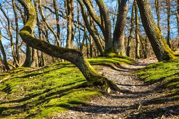 chemin dans une forêt